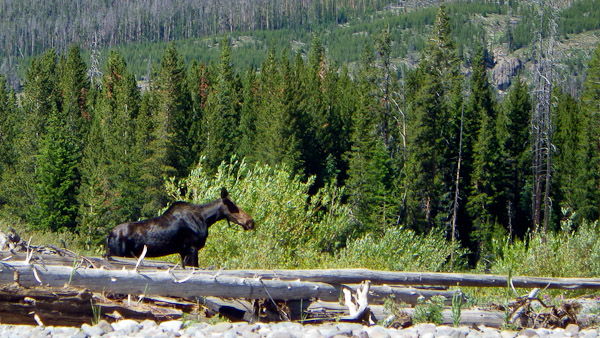 The Thorofare valley has lots of wildlife and scenery.