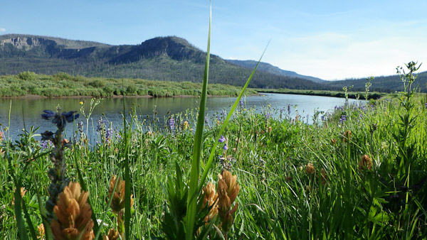 Along side the Yellowstone River.